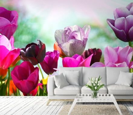 Colorful Tulips wall mural